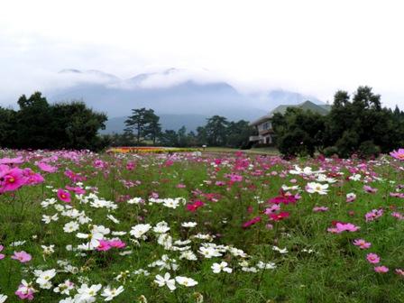 10.10.13-158  花公園8.jpg