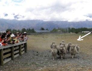 10.12.19-052  羊園2B.jpg