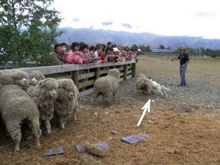 10.12.19-053  羊園3A.jpg