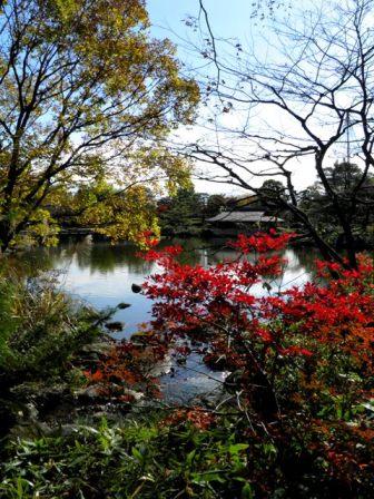 A11.11.22-01  日本庭園21 bbb.jpg