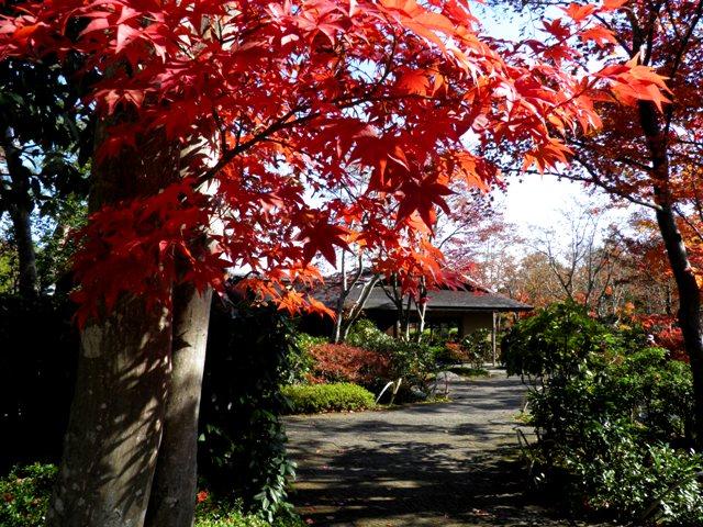 A11.11.22-01  日本庭園41.jpg