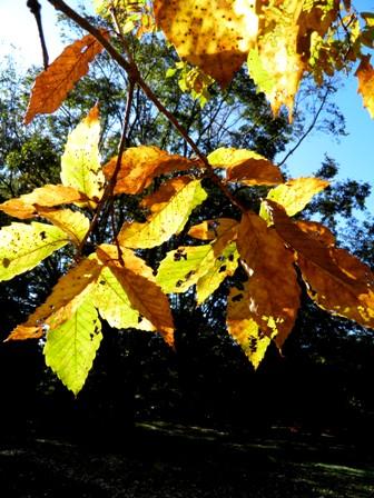 A11.11.22-21  木の葉01.jpg