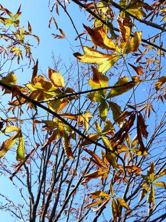 A11.11.22-21  木の葉11.jpg