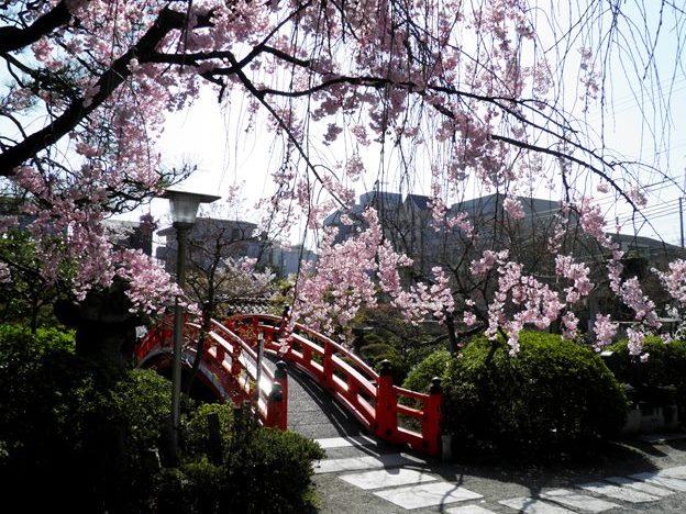 A13.04.05-21  神泉苑19.jpg