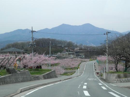 A13.04.13-91 桃畑11.jpg