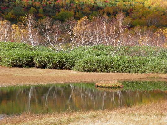 A13.09.06-61 栂池自然園65.jpg