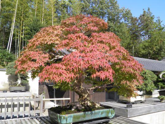 A13.11.06-21 盆栽苑11.jpg