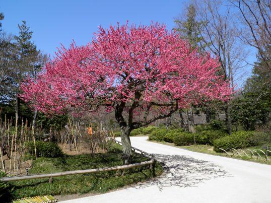 A14.03.24-31 日本庭園19.jpg