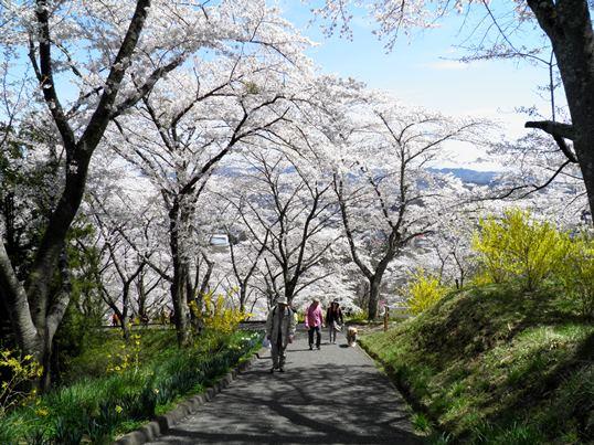 A14.04.15-11  船岡城47.jpg