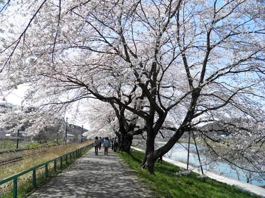 A14.04.15-31  白石川15.jpg