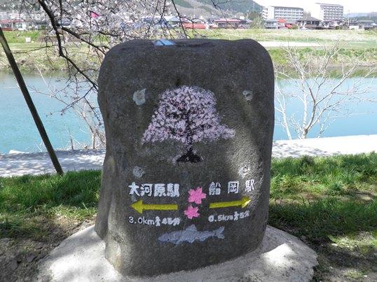 A14.04.15-31  白石川18.jpg
