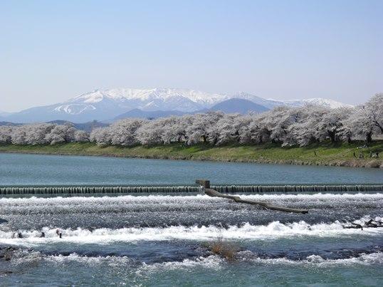 A14.04.15-31  白石川27.jpg