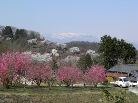 A14.04.16-11  花見山15.jpg
