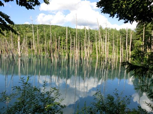 A14.07.15-56 青い池15.jpg