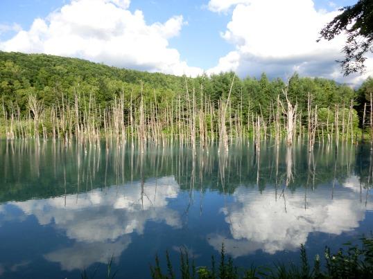 A14.07.15-56 青い池19.jpg