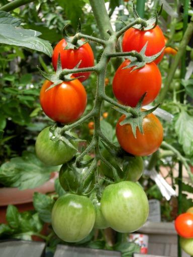 A2014-06-11  家庭菜園35.jpg