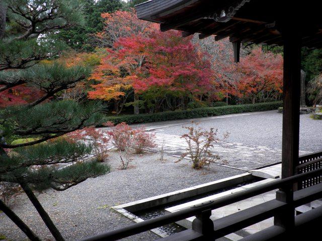 苔寺4.jpg