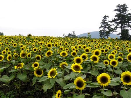 10.10.13-157  花公園7.jpg