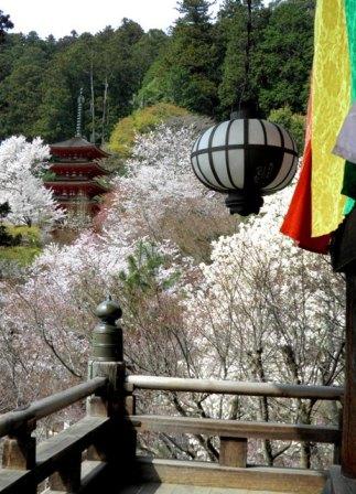 11.04.11-01  長谷寺15 B.jpg