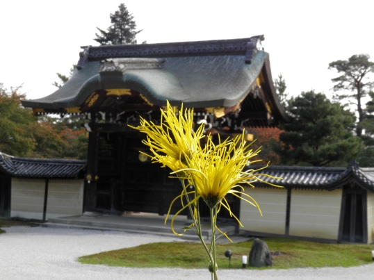 A13.11.02-71 大覚寺15.jpg