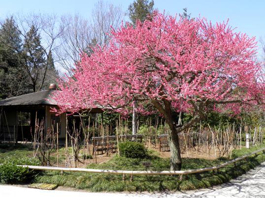 A14.03.24-31 日本庭園23.jpg