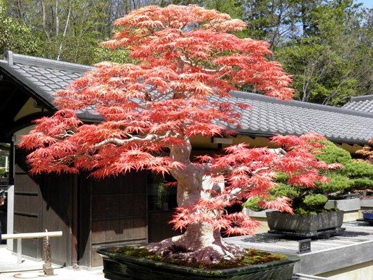A14.04.07-51 日本庭園33.jpg