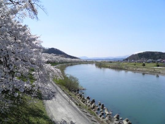 A14.04.15-31  白石川11.jpg