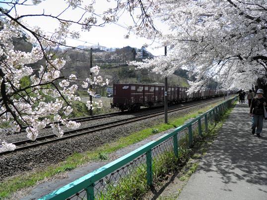 A14.04.15-31  白石川21.jpg