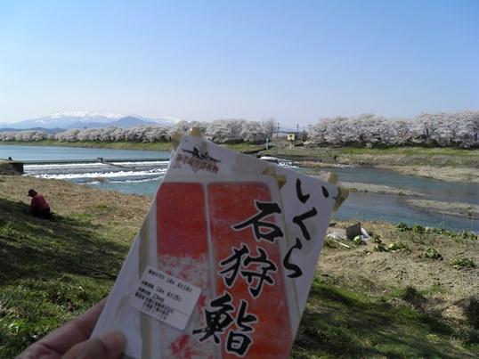 A14.04.15-31  白石川31.jpg