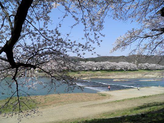A14.04.15-31  白石川43.jpg
